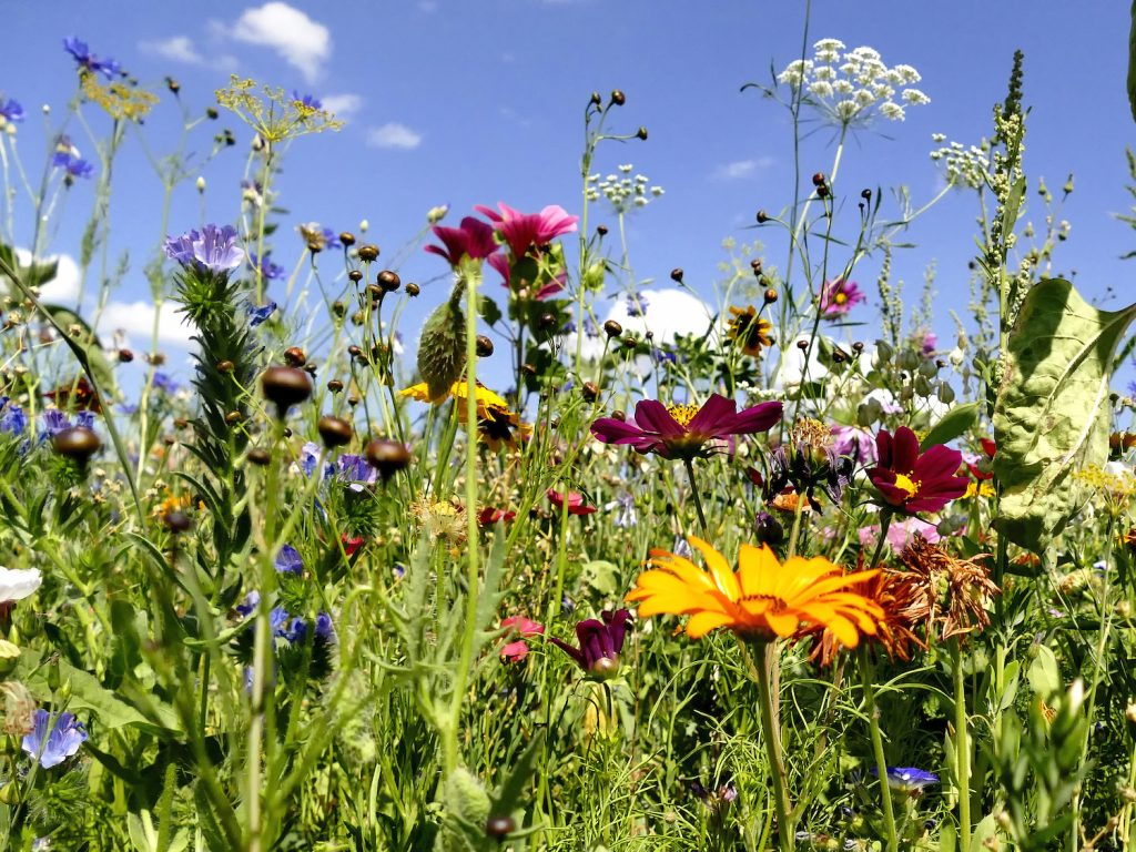 Biodiversität, Landwirtschaft, Nutzung, Ophelia Nick, Zukunft, Nachhaltigkeit, Natur